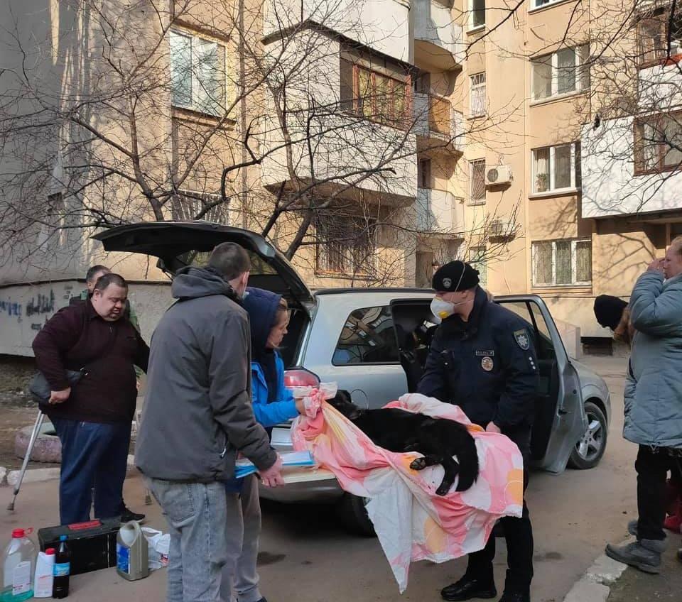 В Одессе собака упала с третьего этажа: она не выжила (фото) «фото»