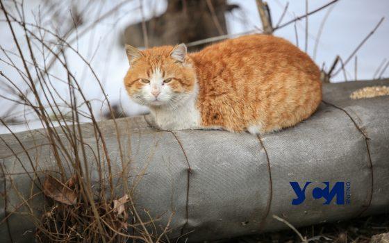 Почти 8 миллионов гривен потратят в Одессе на бездомных животных «фото»