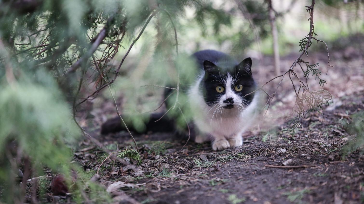 В первый день весны в Одессе похолодает «фото»