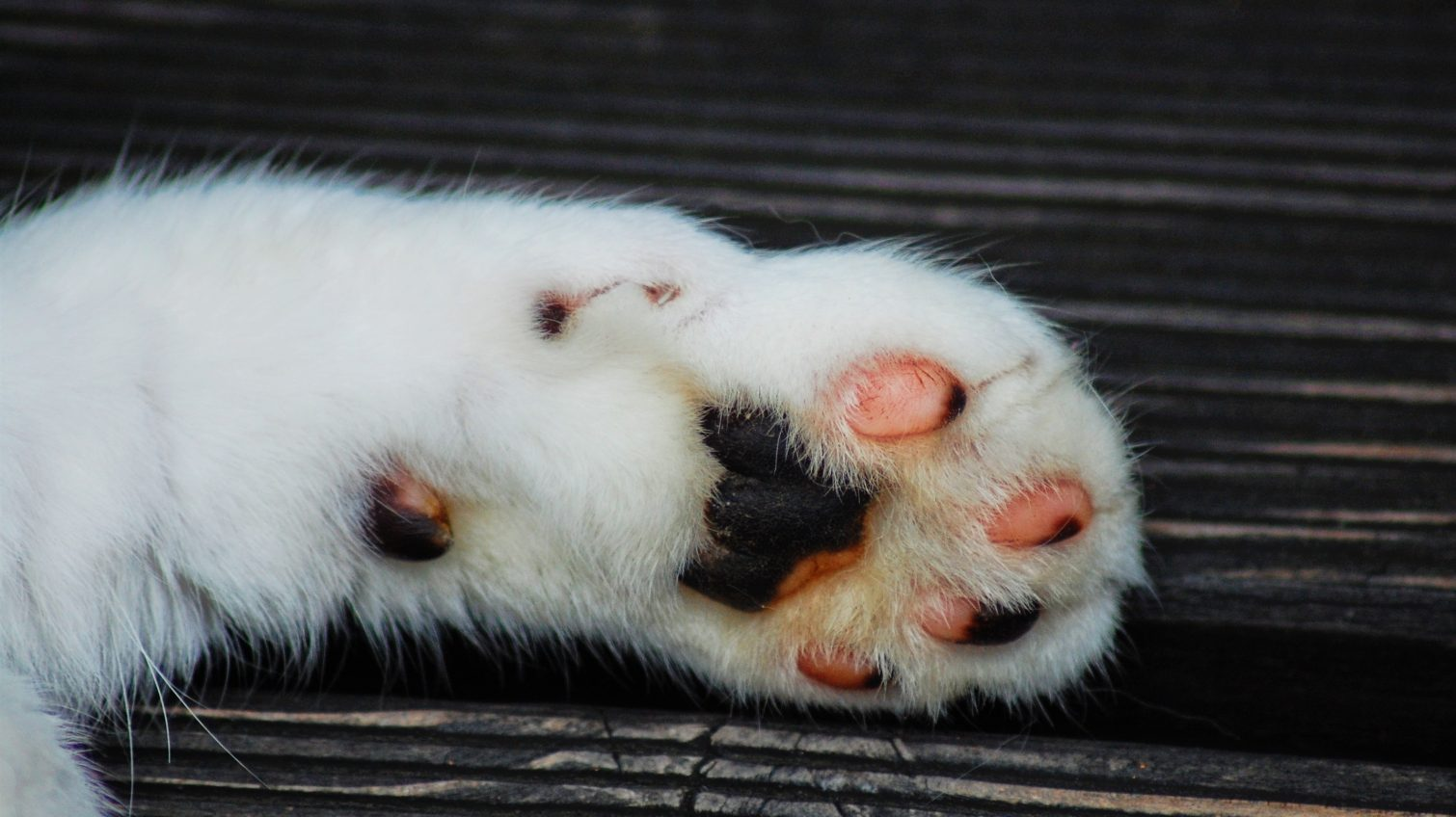В Одесской области задержали живодера, распявшего кота «фото»