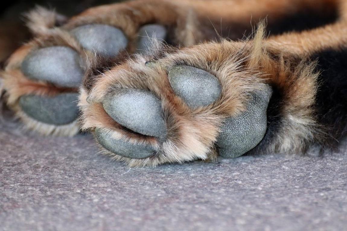 В Черноморске неизвестный отравил бездомных собак (осторожно фото) «фото»