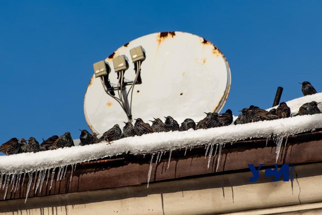 Суббота в Одессе будет морозной, но без снегопада «фото»