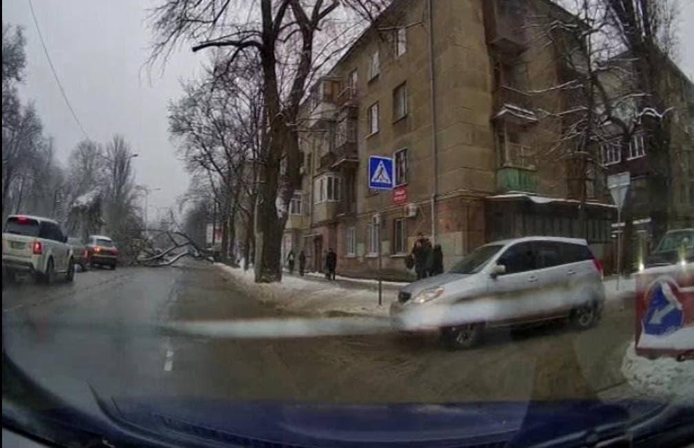 В Одессе дерево рухнуло на дорогу посреди проспекта Гагарина (фото) «фото»