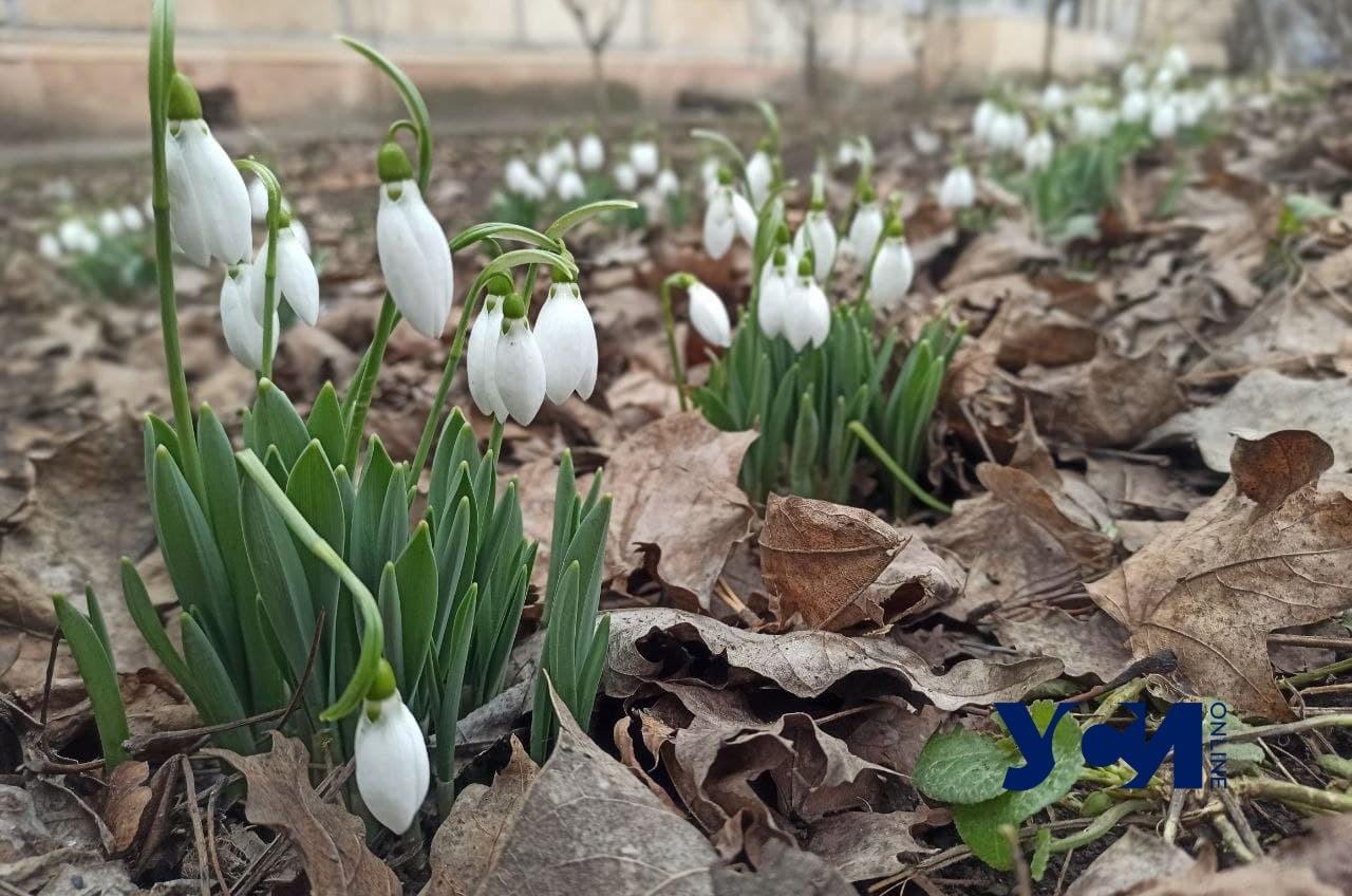 В Одессе снова потеплеет «фото»