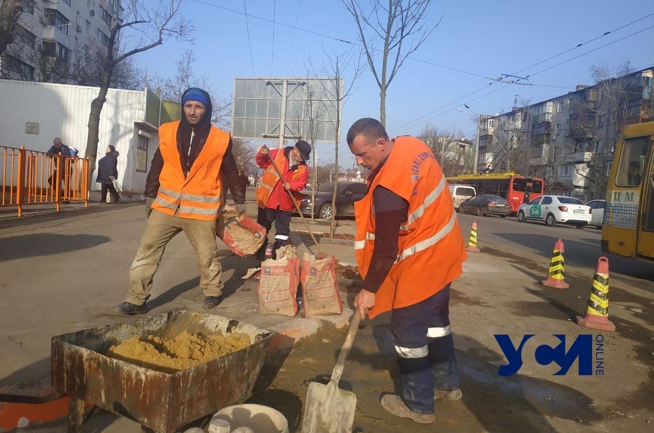 На Черемушках заново высадили деревья на месте уничтоженных ради парковки (фото) «фото»