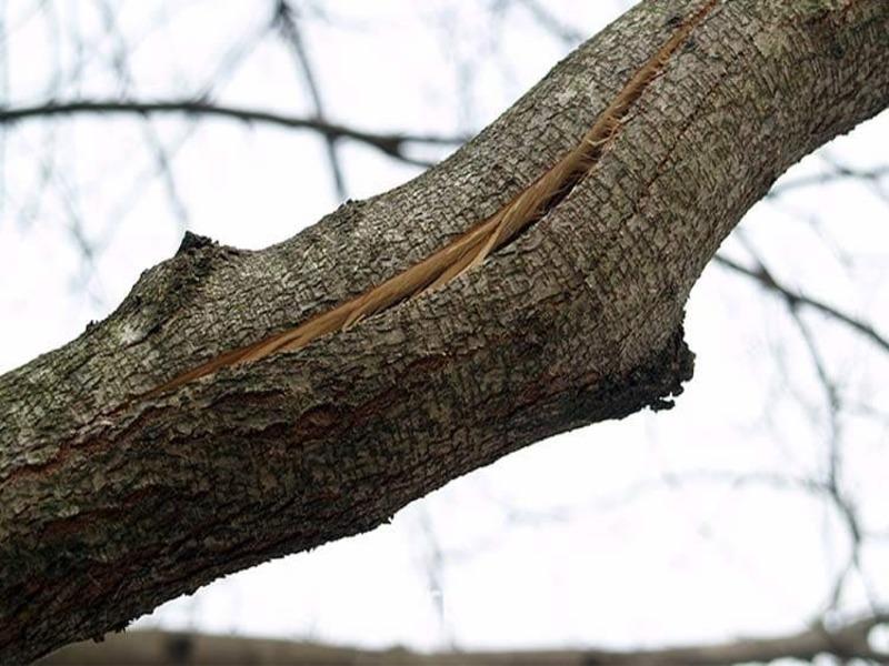 В Одессе ущерб от поврежденных деревьев оценили в 19 тысяч «фото»