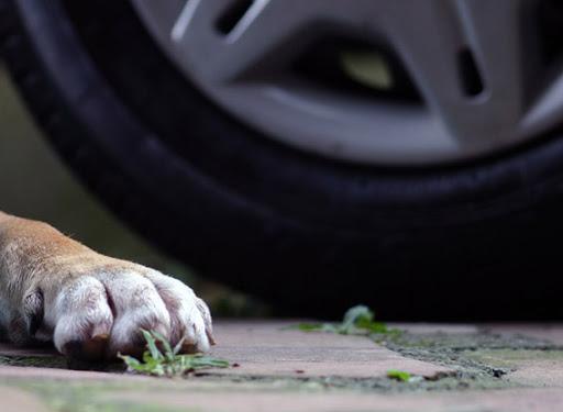 В Одессе оштрафовали водителя, который насмерть сбил собаку «фото»