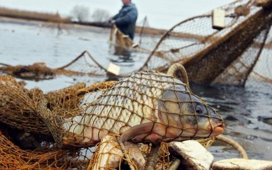 Наловили рыбы на 28 тысяч: на Дунае задержали браконьеров «фото»