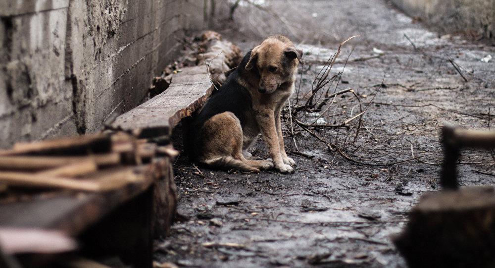 Избил пса металлическим стулом: жителю Одесской области грозит срок «фото»