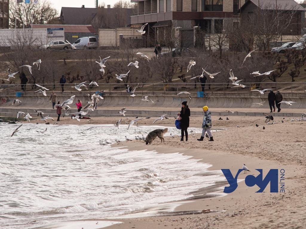 Пляж в Черноморске в ожидании тепла: море, чайки и собаки (фото) «фото»