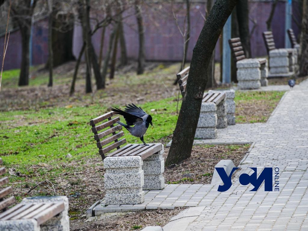 Прогулка в солнечный день: Одесса расцветает в преддверии апреля (фото) «фото»