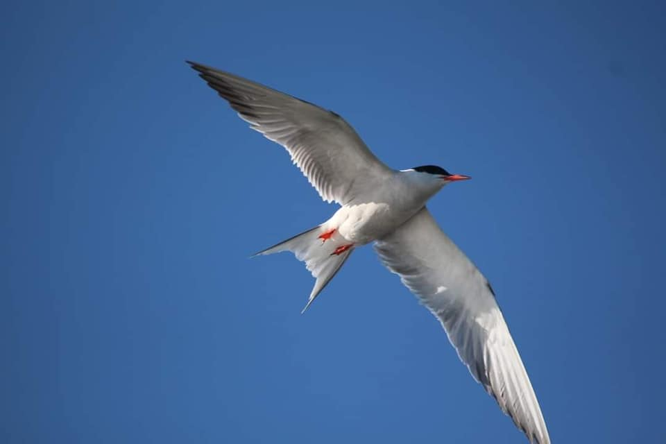 Из Африки в Одесскую область вернулись красивые птицы (фото) «фото»