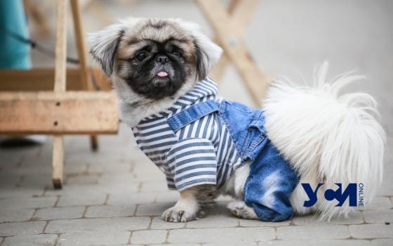 Сегодня Одессе обещают теплую погоду «фото»