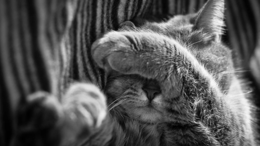 Жестокое убийство кота под Одессой: у дома живодера общественники дрались с охраной (фото, видео) «фото»