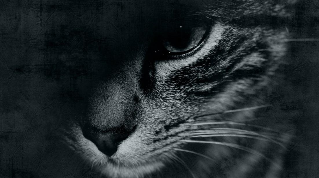 Сосед жестоко убил кота на глазах у хозяев «фото»