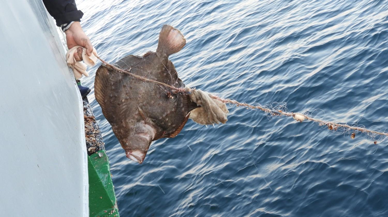В Черном море пограничники нашли браконьерские сети для ловли камбалы (фото, видео) «фото»
