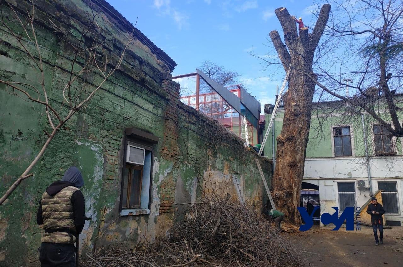 В Одессе рассказали, сколько в городе аварийных деревьев «фото»