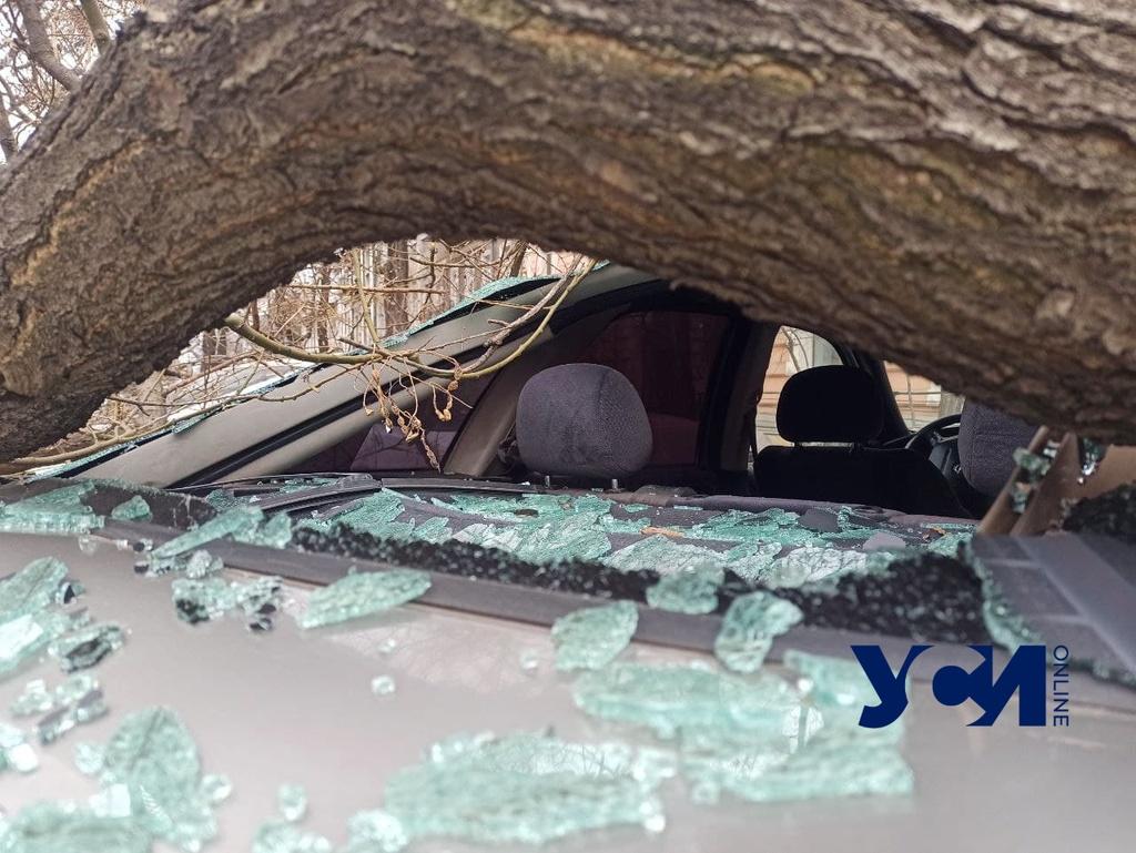 В Одессе усиливается ветер: на Пастера дерево рухнуло на машину (фото) «фото»