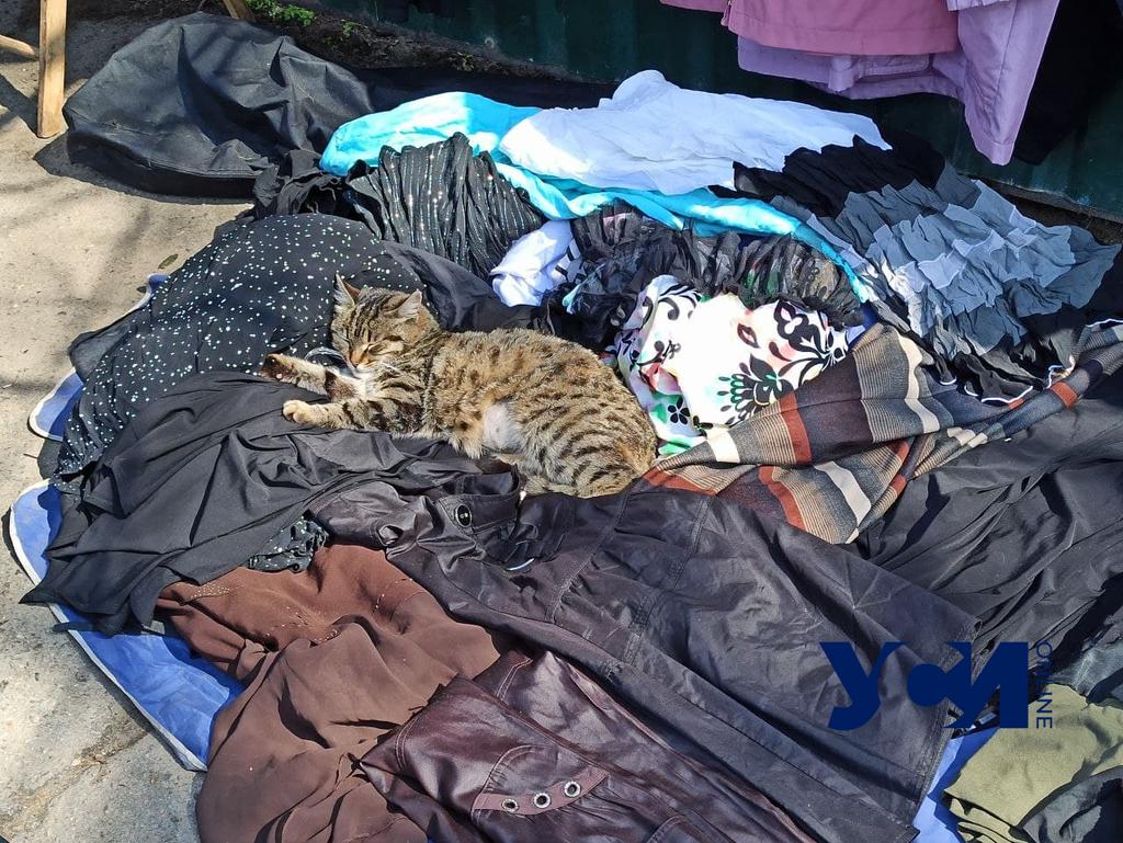 Молдаванка mood: атмосфера и карантин на Староконном рынке (фото) «фото»