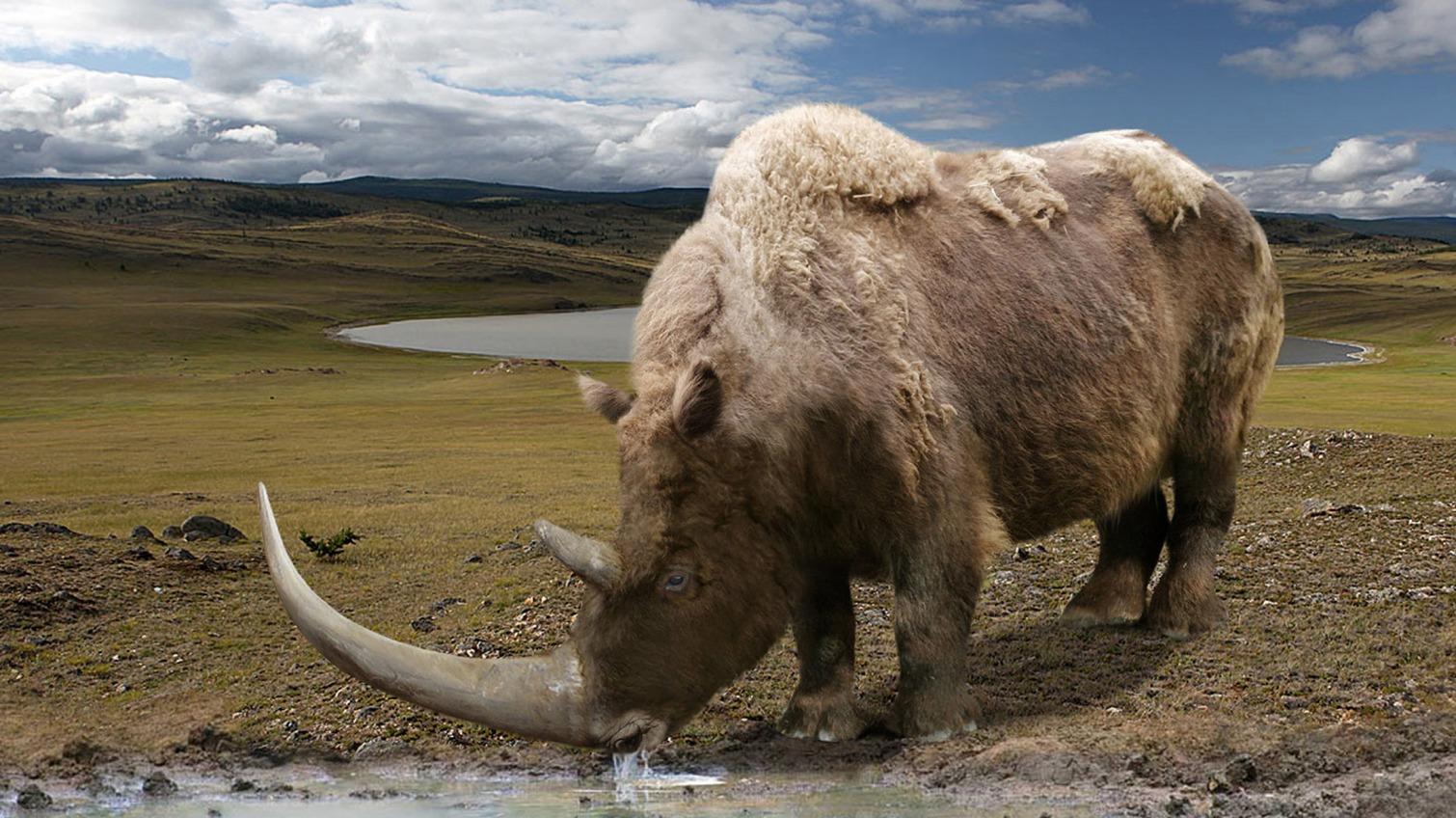 Родина носорогов: в Одесской области нашли кость доисторического зверя (фото) «фото»
