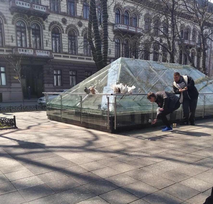 Склеивали перья: у фотобизнесменов в центре Одессы изъяли голубей (фото) «фото»