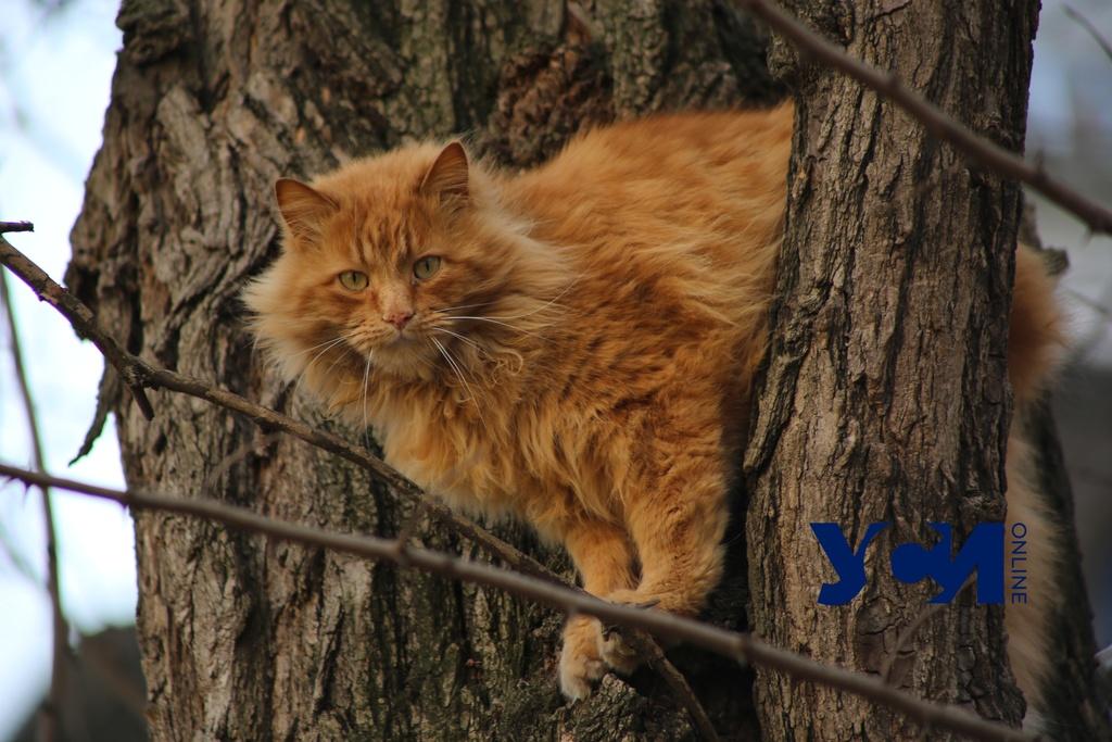 Стерилизация уличных котов Киевского района обойдется городу в 208 тысяч гривен «фото»