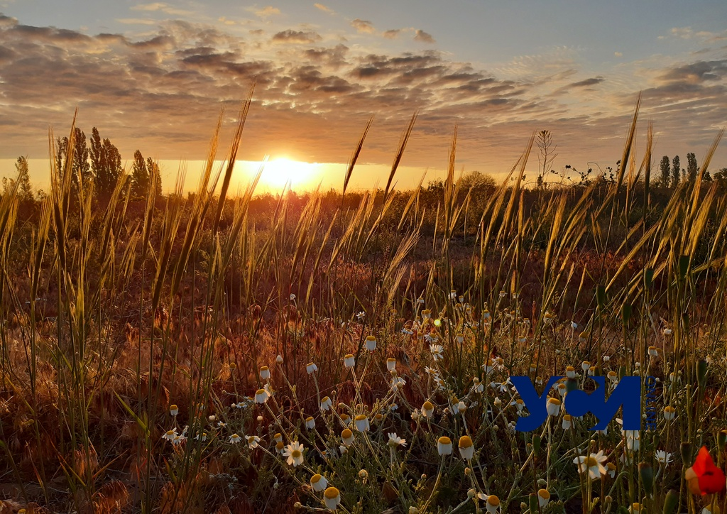 В Одесской области хотят дать деньги лучшим селам «фото»