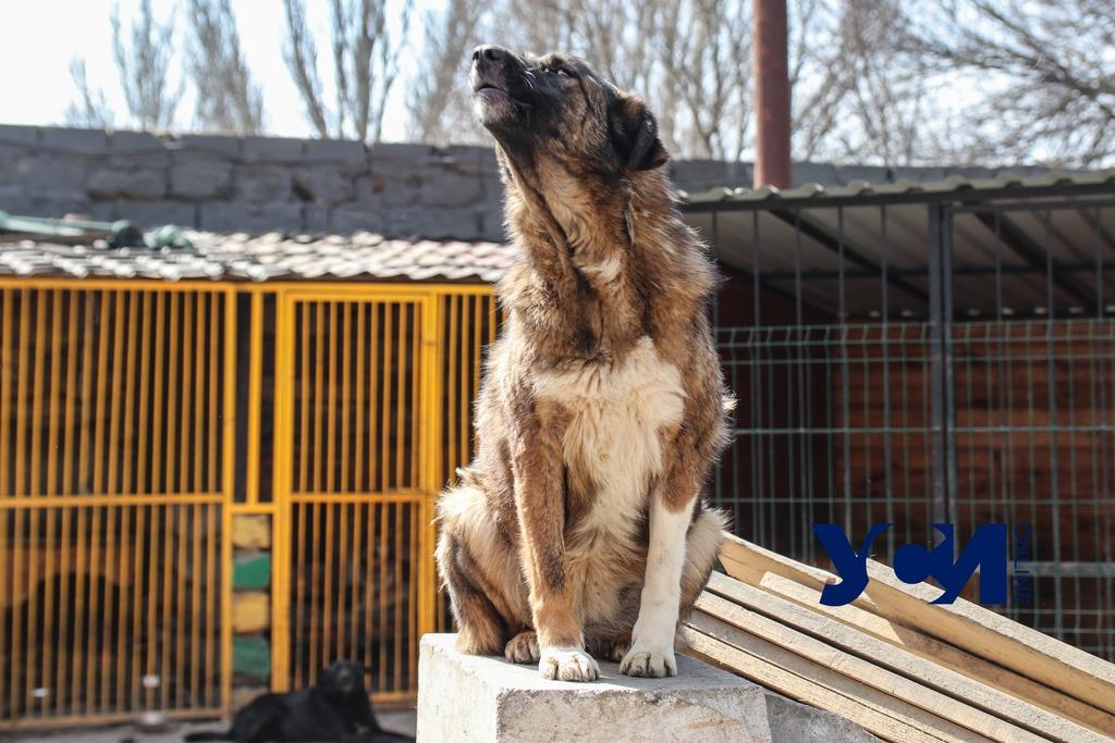 За март в Одессе отловили 100 бездомных кошек и собак «фото»