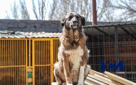 Приют «Ковчег»: как живут 500 собак под одной крышей (фото, видео) «фото»