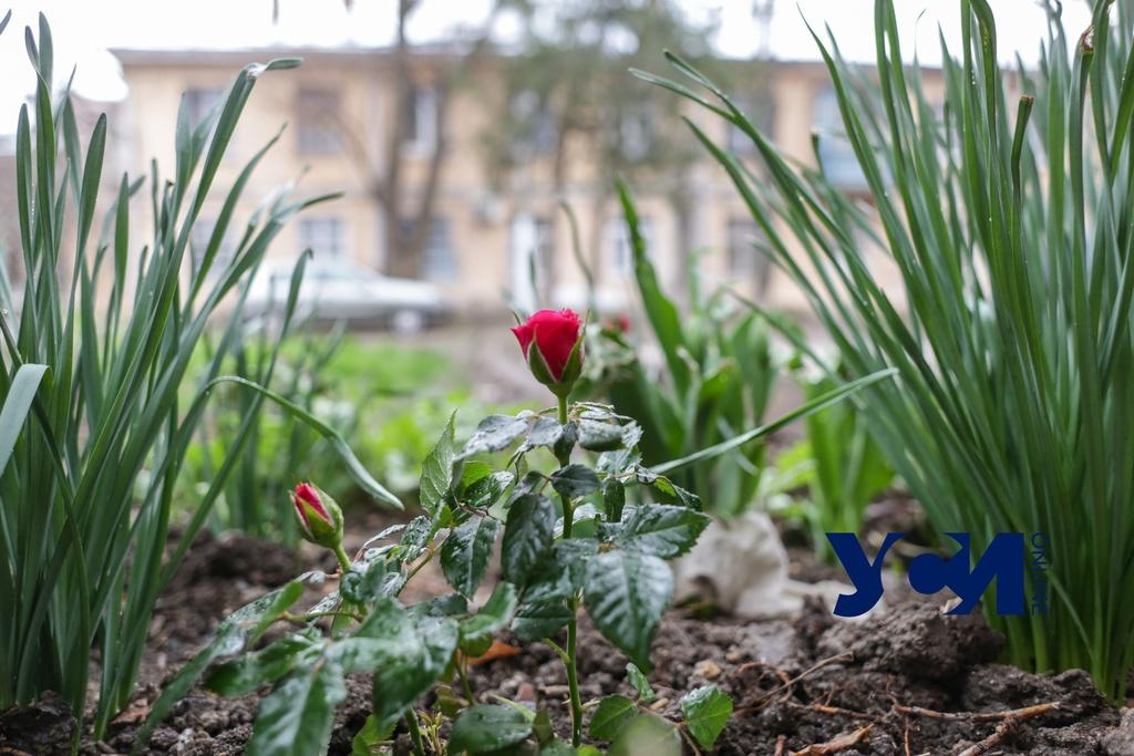 Сегодня в Одессе будет дождливо «фото»