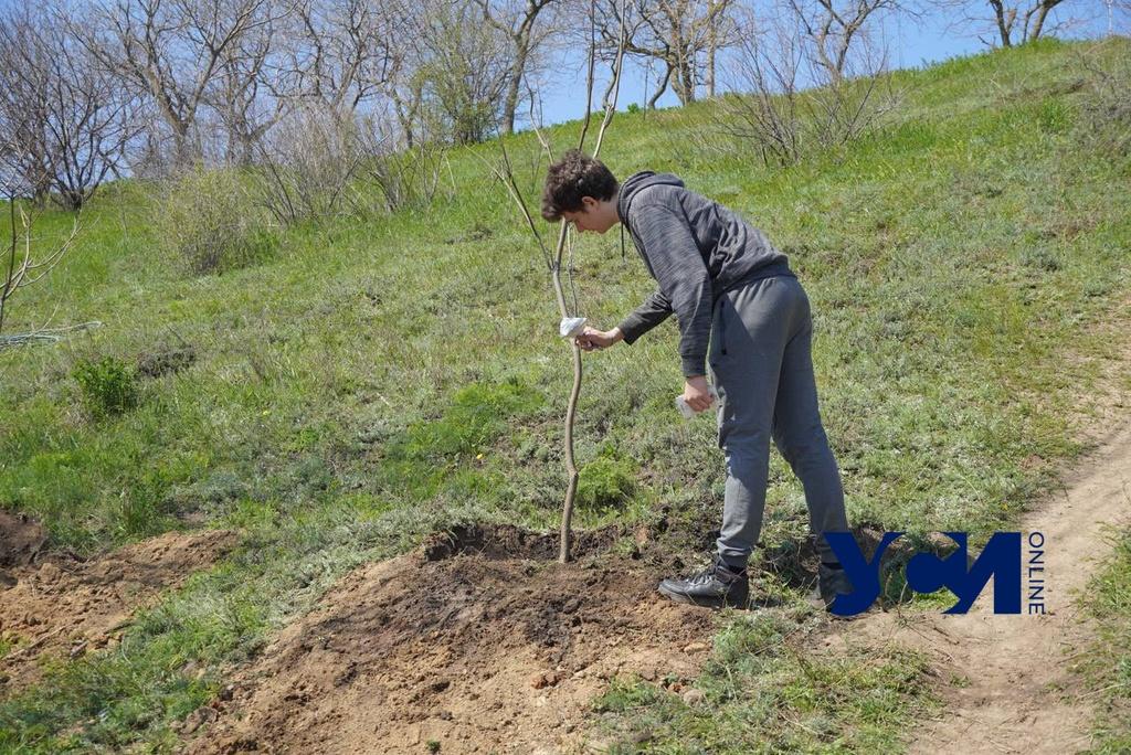 Одесские лицеисты высадили деревья на склонах (фото, аудио) «фото»