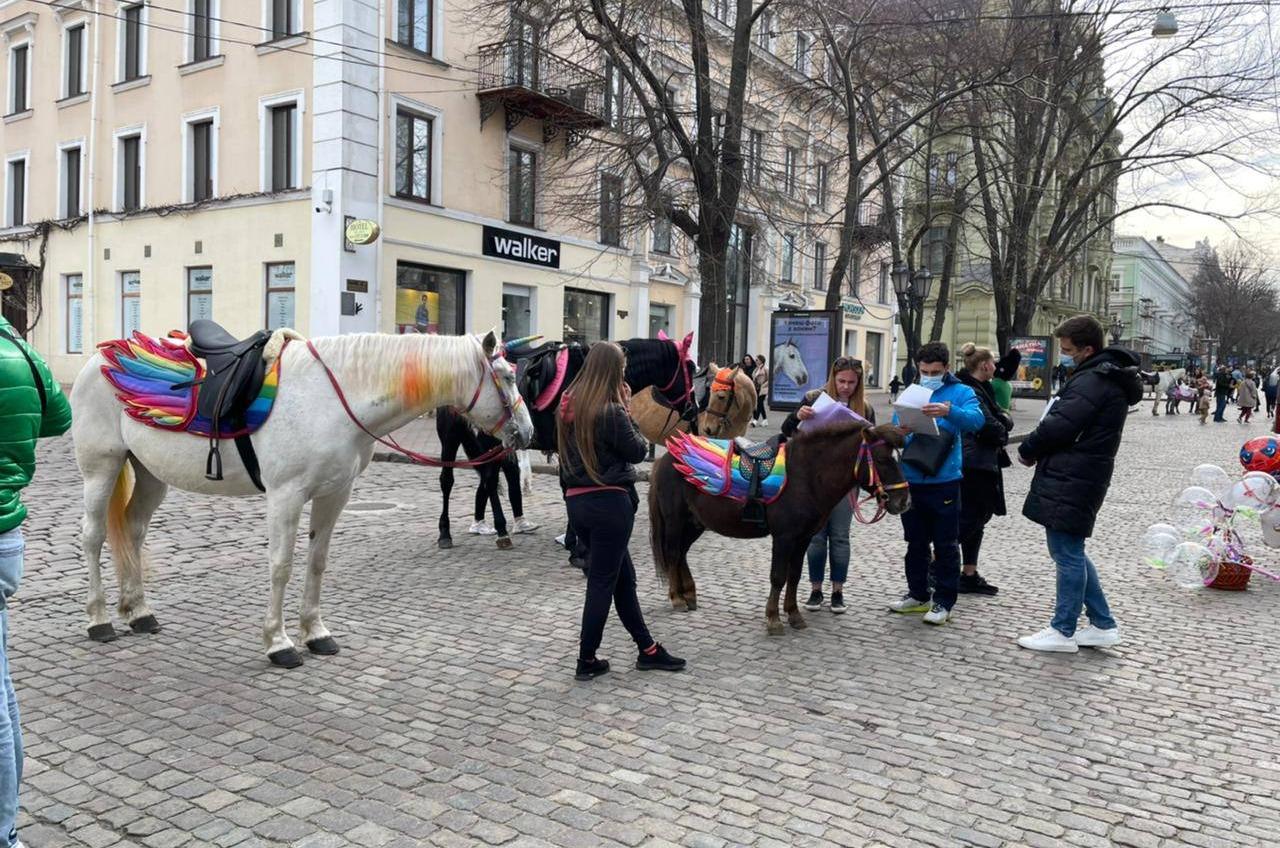 От 850 до 1700 гривен – штраф для владельцев лошадей и пони с Дерибасовской (фото) «фото»