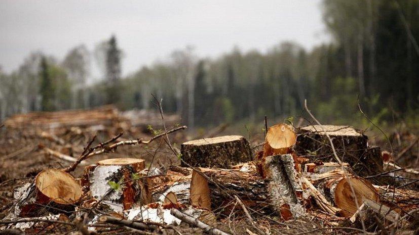 В 2020 году в Одессе удалили 1259 деревьев «фото»