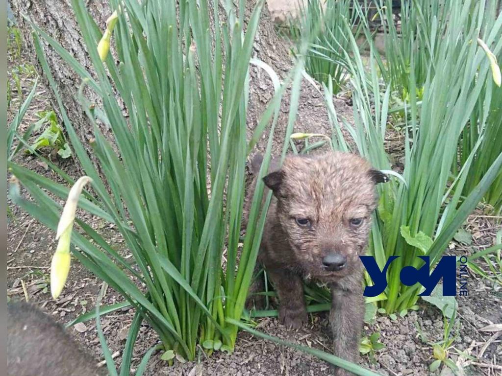 В одесском зоопарке родились волчата: мама от них отказалась (фото) «фото»