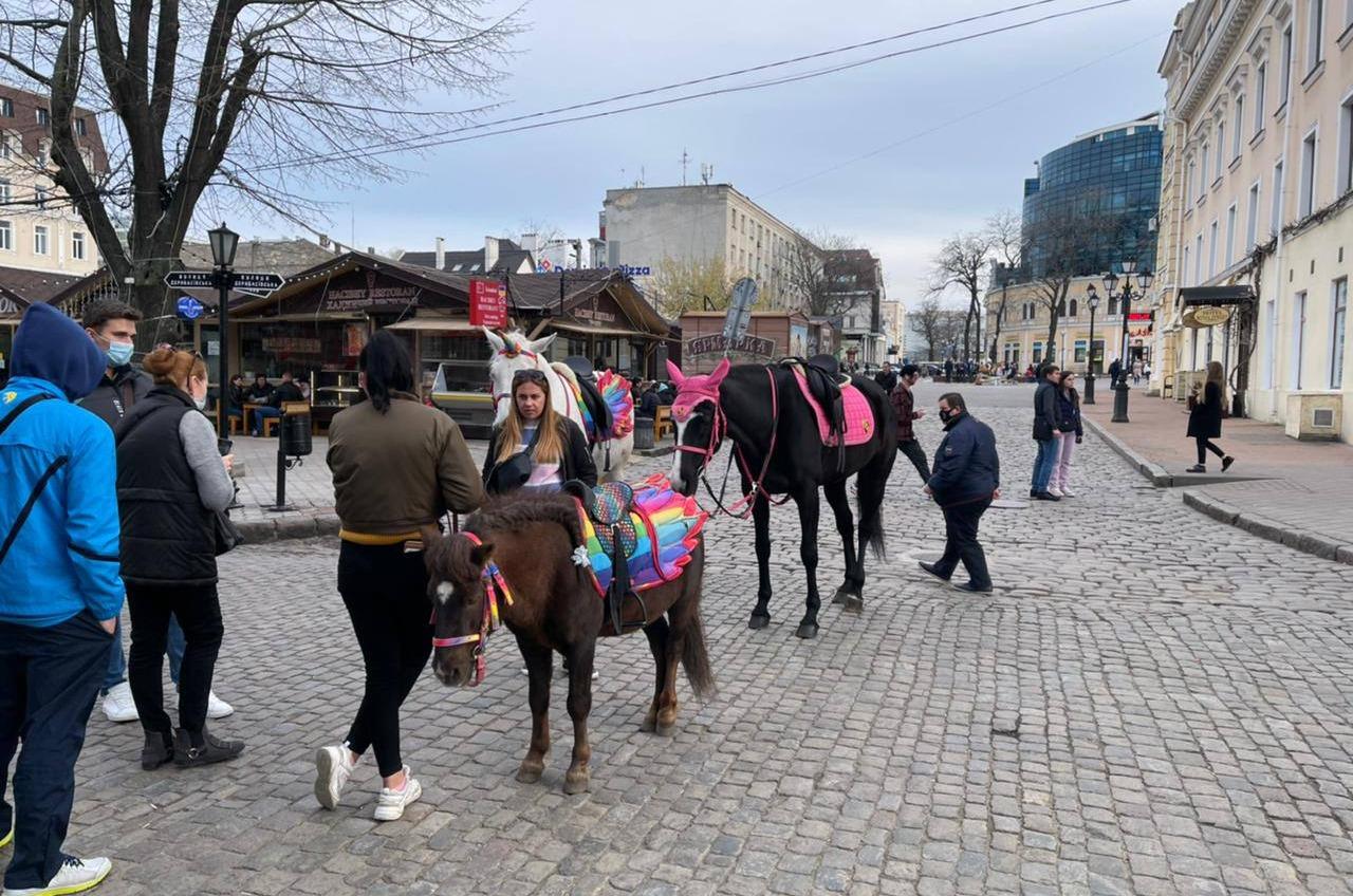 Нарушители на пони: в центре Одессы прошел рейд против эксплуатации животных (фото, аудио) «фото»
