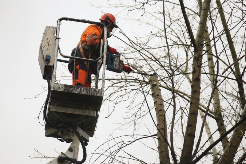 На Екатерининской перекроют движение из-за обрезки деревьев «фото»