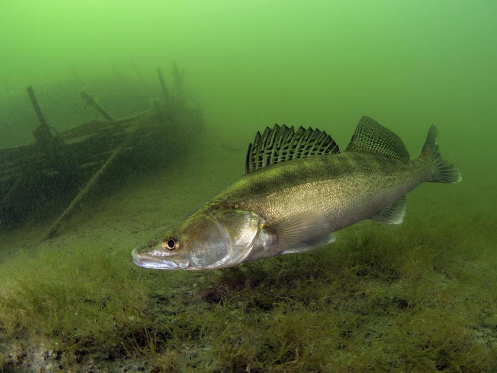 На озере в Одесской области установили рыбьи гнезда «фото»
