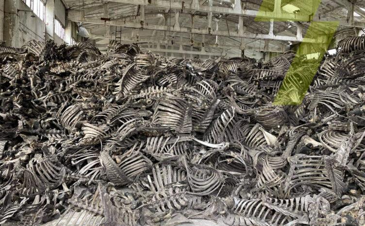 Полиция проверит птицекомбинат в Одессе, где нашли гору костей животных (фото) «фото»