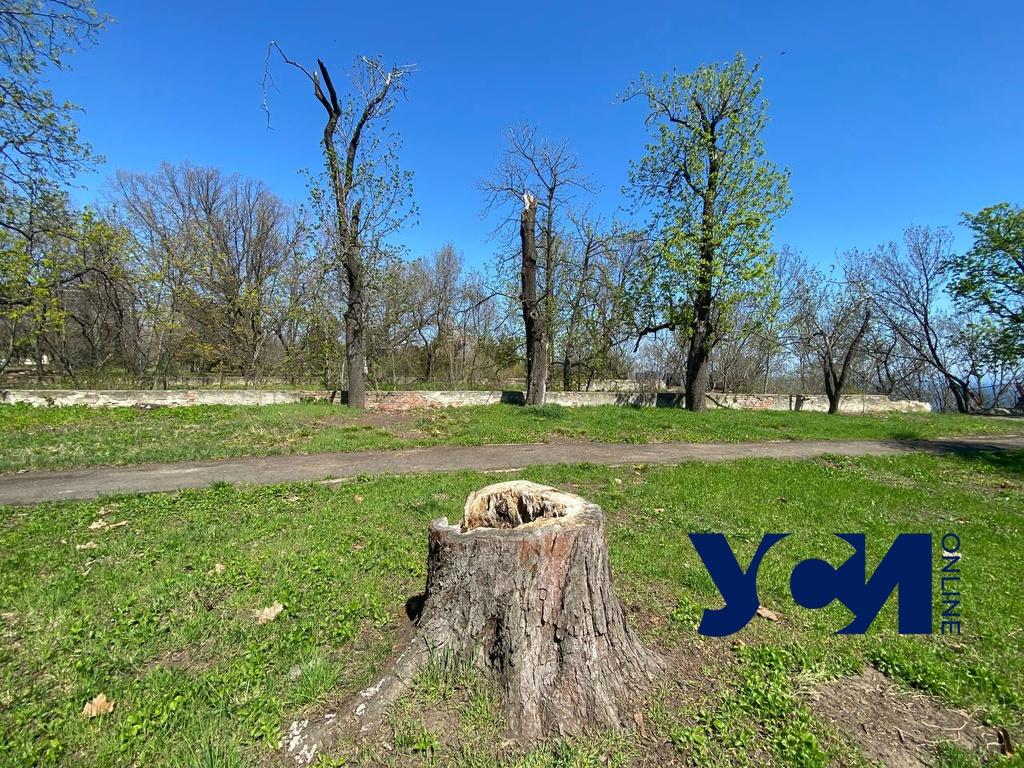 На склонах у дачи Маразли спилили более 10 деревьев, а пни замаскировали под старые (фото) «фото»