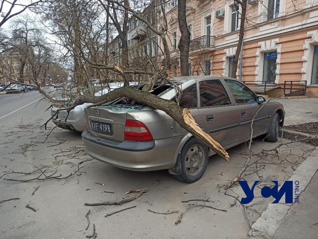 Что делать, если дерево упало на ваш автомобиль (видео) «фото»