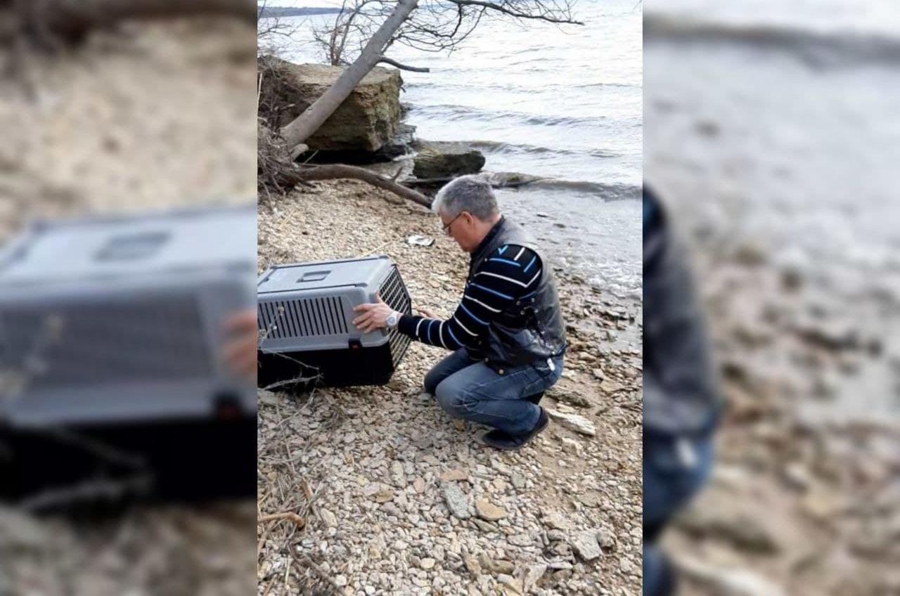 В Одесском зоопарке спасли оголодавшую птицу и выпустили на волю (фото, видео) «фото»