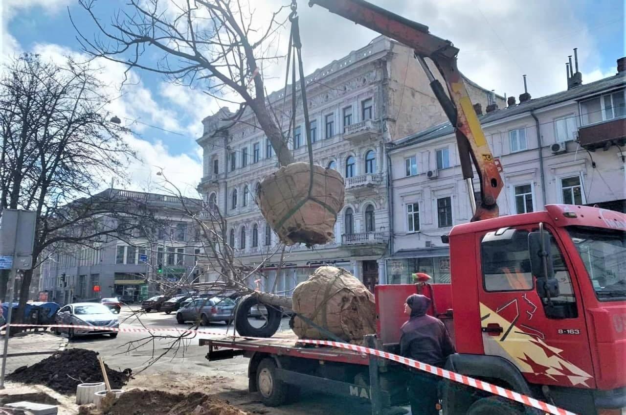 На Греческой коммунальщики высадили адамовы деревья (фото) «фото»