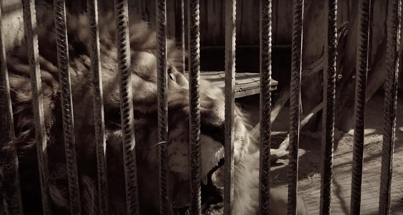 В Одессе показали трейлер кинокартины «Улыбка львицы» (видео) — УСИ Online