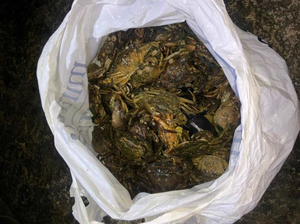 Наловил крабов на 3 миллиона: в Одесской области задержали браконьера (фото) «фото»