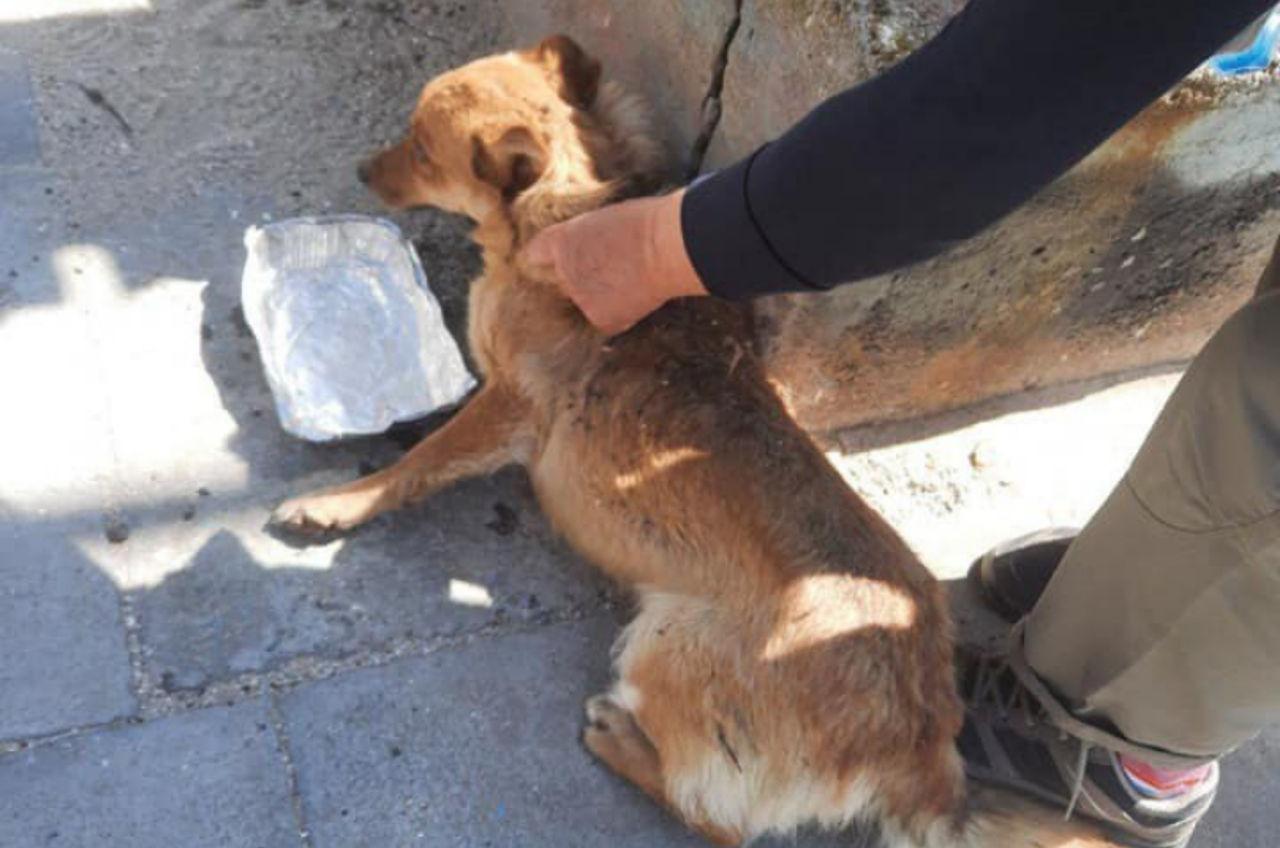 В Лузановке спасли пса, который застрял под контейнером (фото) «фото»