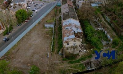 На огороженном для стройки участке под Стамбульским парком вырубили деревья (фото) «фото»