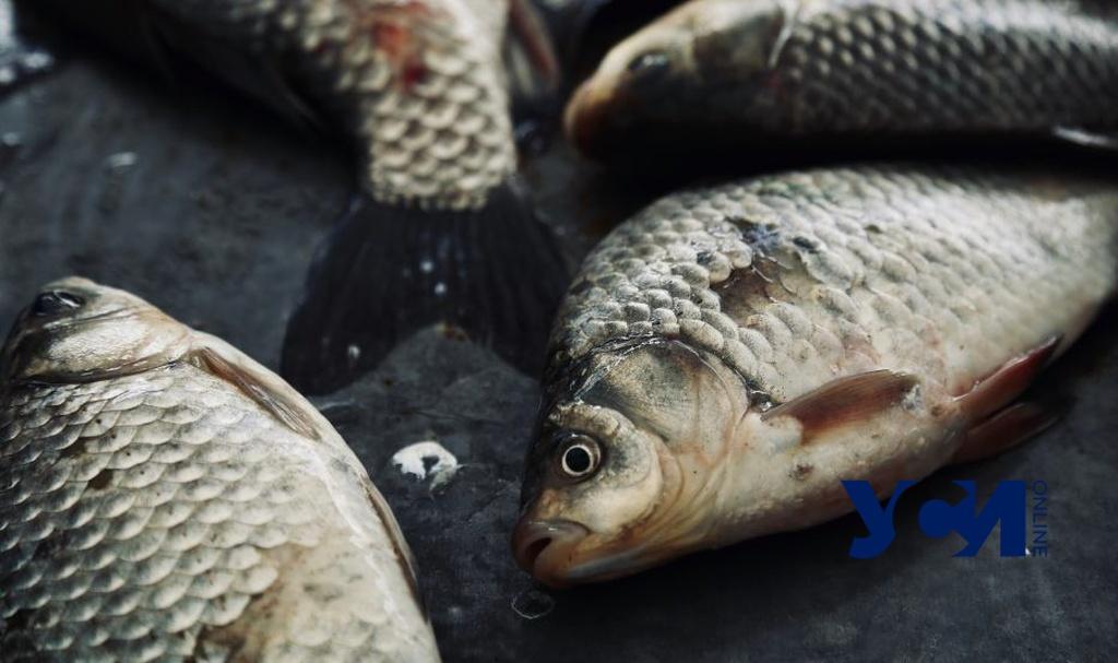 Нерест под угрозой: в Одесской области может подорожать речная рыба (аудио) «фото»