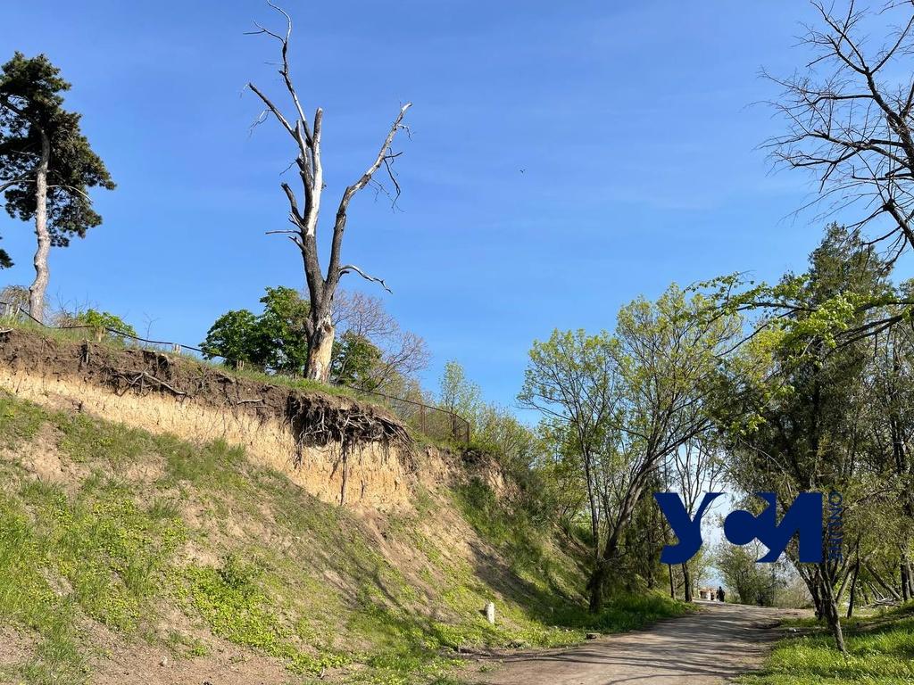 У Чкаловского пляжа над дорогой опасно нависло сухое дерево (фото) «фото»