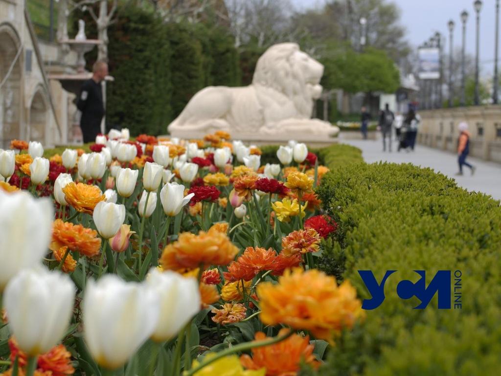 Пятница в Одессе будет теплой, а в области обещают дождь «фото»