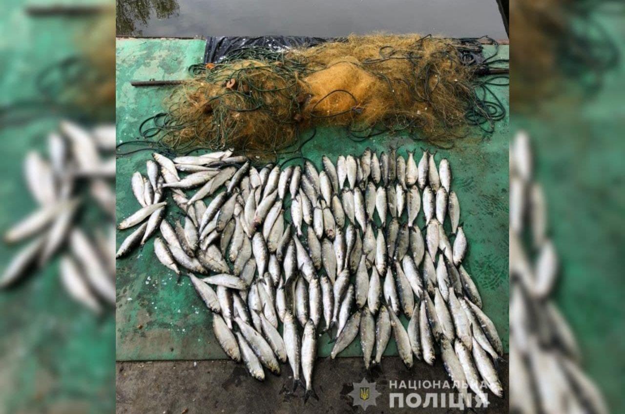 Селедка на 200 тысяч: в Одесской области задержали браконьеров (фото) «фото»